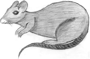 Файл:English Rat.jpg