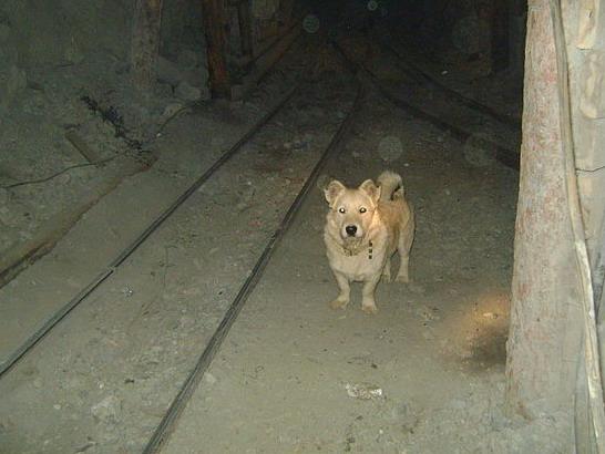 Файл:Miner's dog.jpg