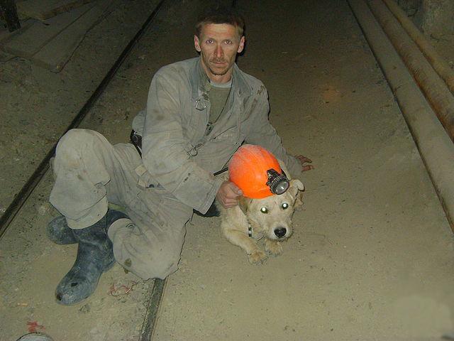 Файл:Miner's dog-1.jpg