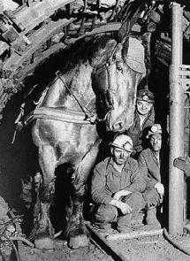 Pit Pony-6.jpg