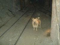 Miner's dog.jpg